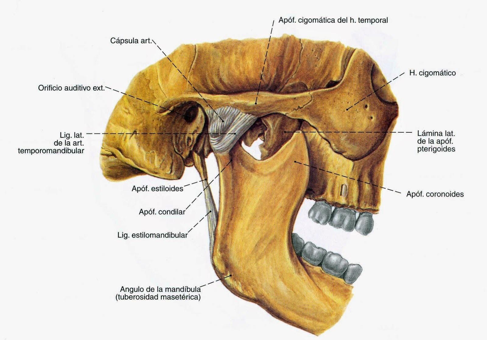 Artrita - Afecțiuni ale articulației temporo-mandibulare